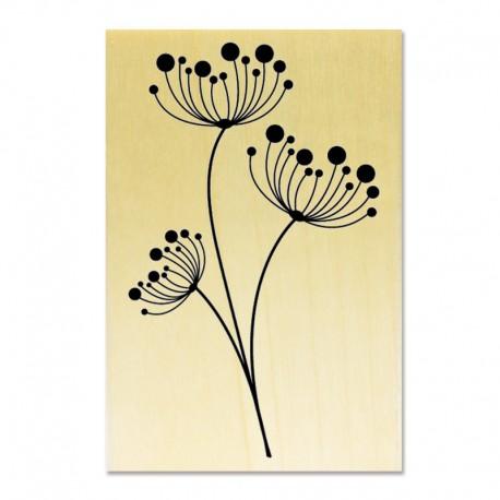 Tampon Fleurs Ombellifères