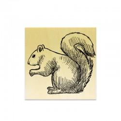 Rubber stamp - Squirrel