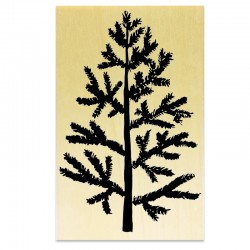 COLLECTION - Branches Hivernales - Sapin