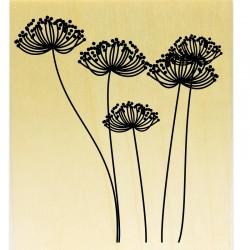 COLLECTION - Silhouettes de Plantes - Ombellifères
