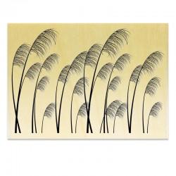 COLLECTION - Silhouettes de Plantes - Graminées