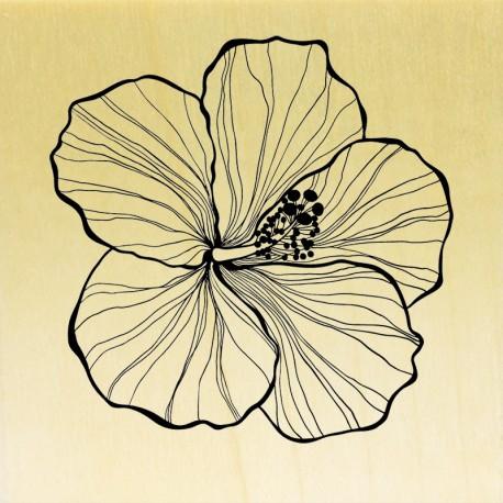COLLECTION - COLLECTION - Enjoy Flowers - Fleur d'Hibiscus
