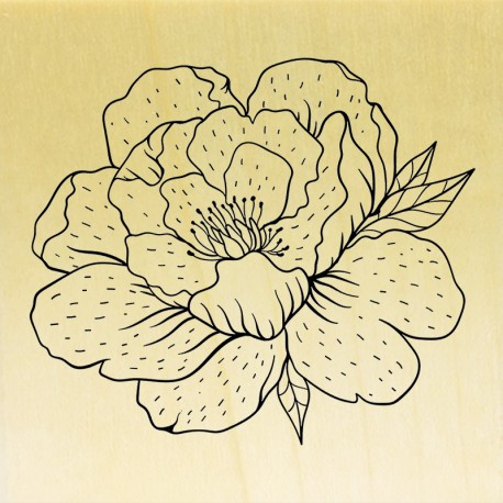 COLLECTION - Enjoy Flowers - Pivoine