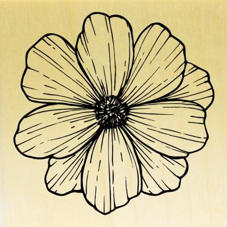 COLLECTION - Histoire de Fleurs - Anemone