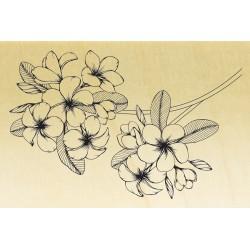 COLLECTION - Histoire de Fleurs - Frangipanier