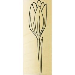 COLLECTION - Histoire de Fleurs - Fleur Fne